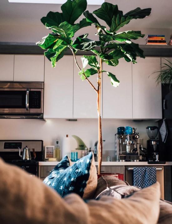grote kamerplant tabaksplant
