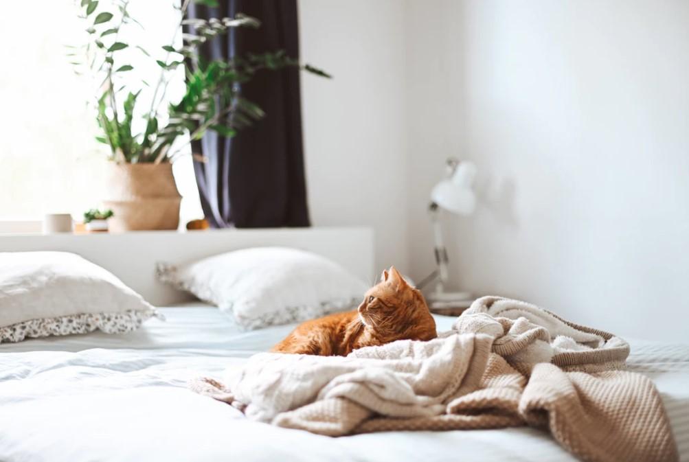 goed matras kopen kat