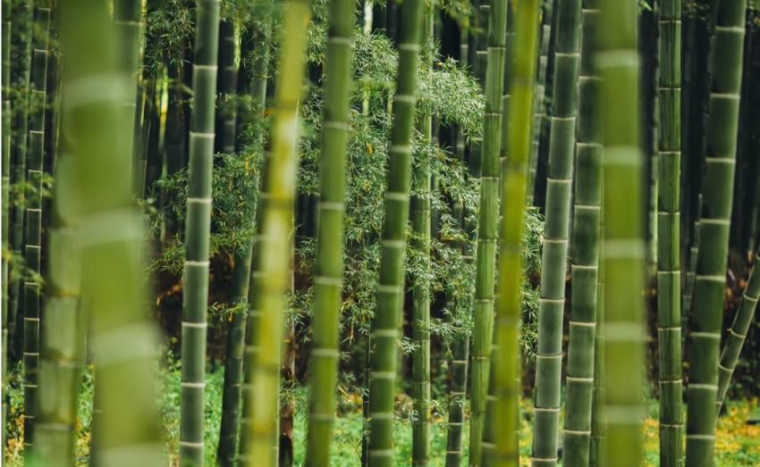 bamboe kleding is duurzaam